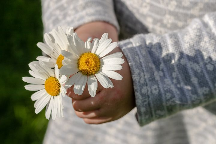 Geben-Blume